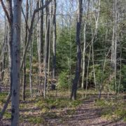 Panorama offering a look into a mixed species Pennsylvania woodlot in late February.